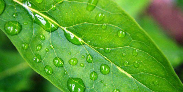 plant-leaf-1361447-639x424